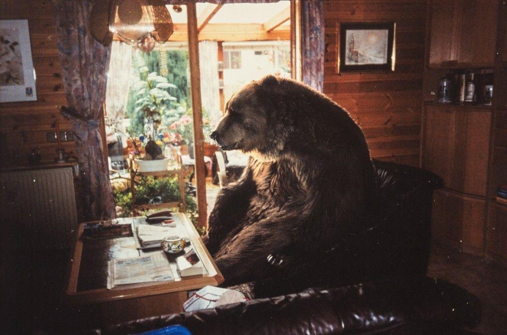 Ayı / Bear / Bär